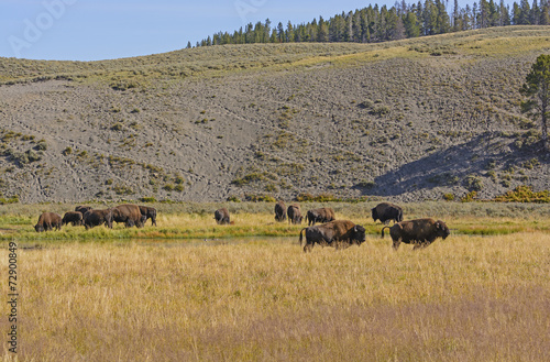 Deurstickers Bison Bison on the Grasslands in the American West