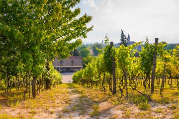 Hungarian Vineyard Estate