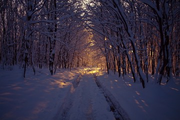 Winter trip in forest at Bakony, Hungary