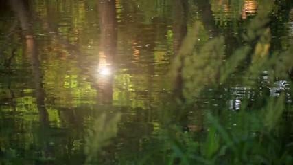 川面に映る緑と光2