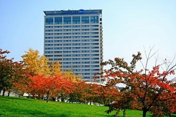 Beautiful sakura cherry at autumn time