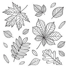 Set of images of leaves of different trees.