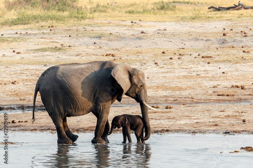Plexiglas Olifant African elephants with baby elephant drinking at waterhole