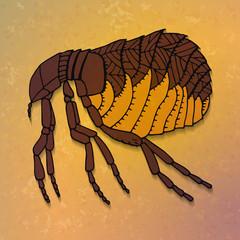 Brown flea.