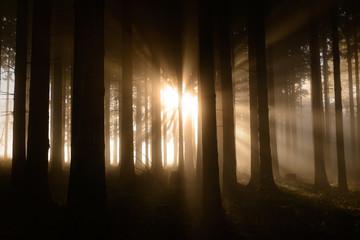 Zauberwald im Herbstnebel