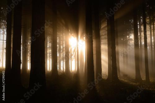 canvas print picture Zauberwald im Herbstnebel