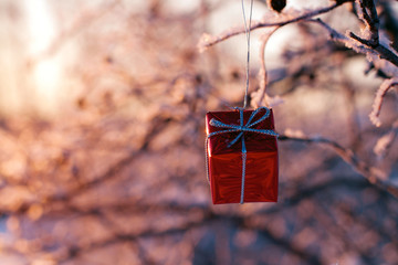 Christmas gift hanging on a tree in winter