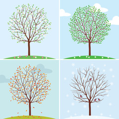 Seasons. Trees in spring, summer, autumn and winter.