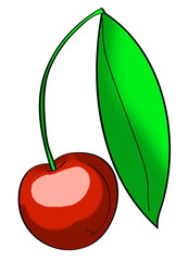 Cherry illustration