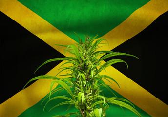 Hennep on Jamaican Flag