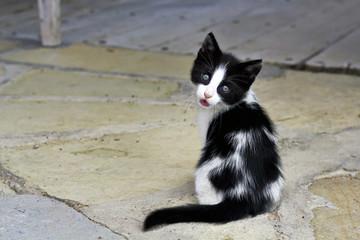 Photo of a sad cat on the street