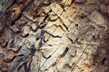 Bark beetle tunnels