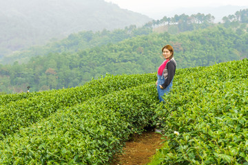 Woman in herb tea plant or Camellia sinensis field