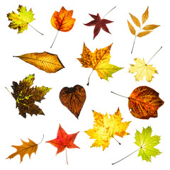 Colorful autumn leaves collage