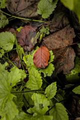 Herbst und Frühling