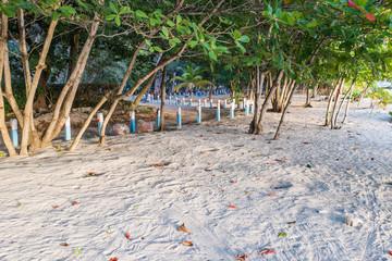 Almond trees at Drill Hall Beach Barbados