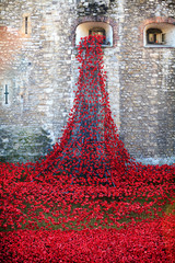Tower of London, Red Poppies display