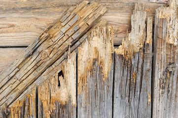 Brett mit Befall von Holzwurm