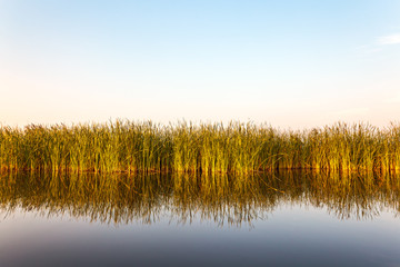 River with reed in Friesland, The Netherlands