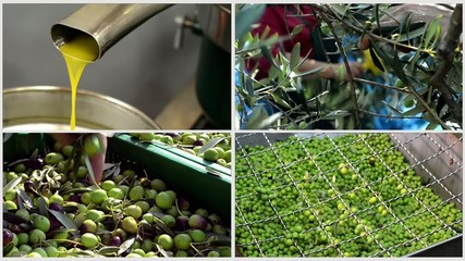 olives in mill collage