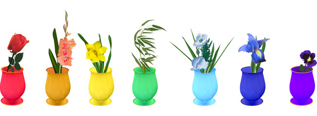 rainbow flowers in vases isolated on white