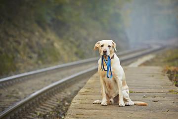 Dog on the railway platform