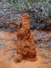 Termite mound in the red area of Australia
