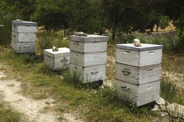 Bienenstöcke, Kloster Senanque, Provence