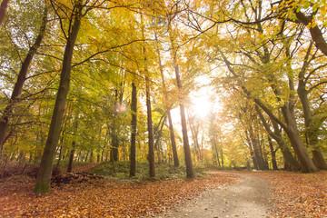 Sonne scheint durch Waldlichtung