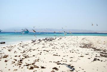 Seagulls flying on Egyptian sandy beach.