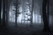 Tree silhouette in a fairytale spooky dark forest on fog