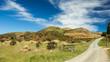 Feldweg ins Grüne in Neuseeland