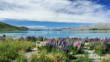 canvas print picture - Spiegelnder See, Lake Tekapo