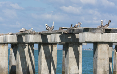 pelican sitting on concrete columns