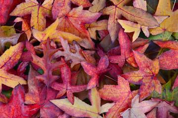 Mooi gekleurde herfstbladeren