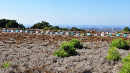 beekeeping,island,Kos,Greece