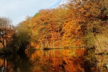 Fluss im Herbst