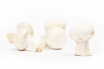 Group of white mushrooms - shallow depth of field
