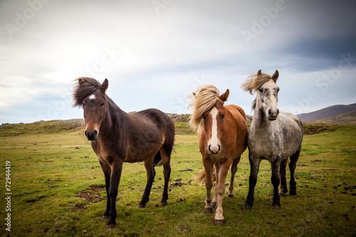 Fotobehang Paardensport drei