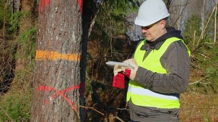 Forest engineer with a tablet PC near tree in forest