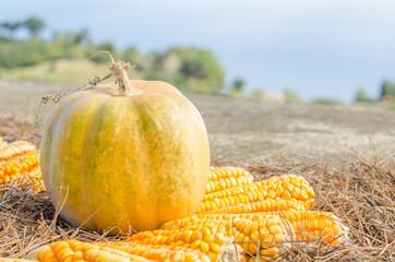 pumpkin and corn cobs