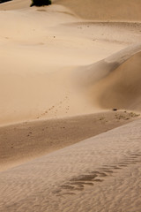 Sand dunes at Thar desert