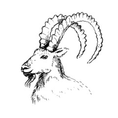 Vector illustration of  goat, symbol of New Year.