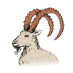 Vector illustration of  goat, symbol of New Year 2015.
