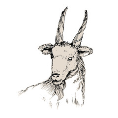 New year card 2015 with goat. Hand drawn illustration.
