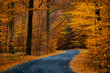 Asphalt road in beautiful golden beech forest during autumn