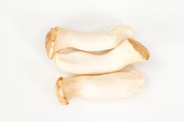 mushrooms on white background.