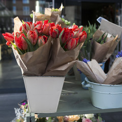 blue hyacinths and red tulips
