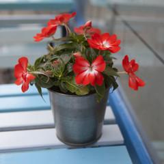 artificial Impatiens flower