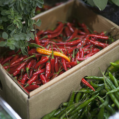 Dried red chilli PEPPER in box , food ingredient